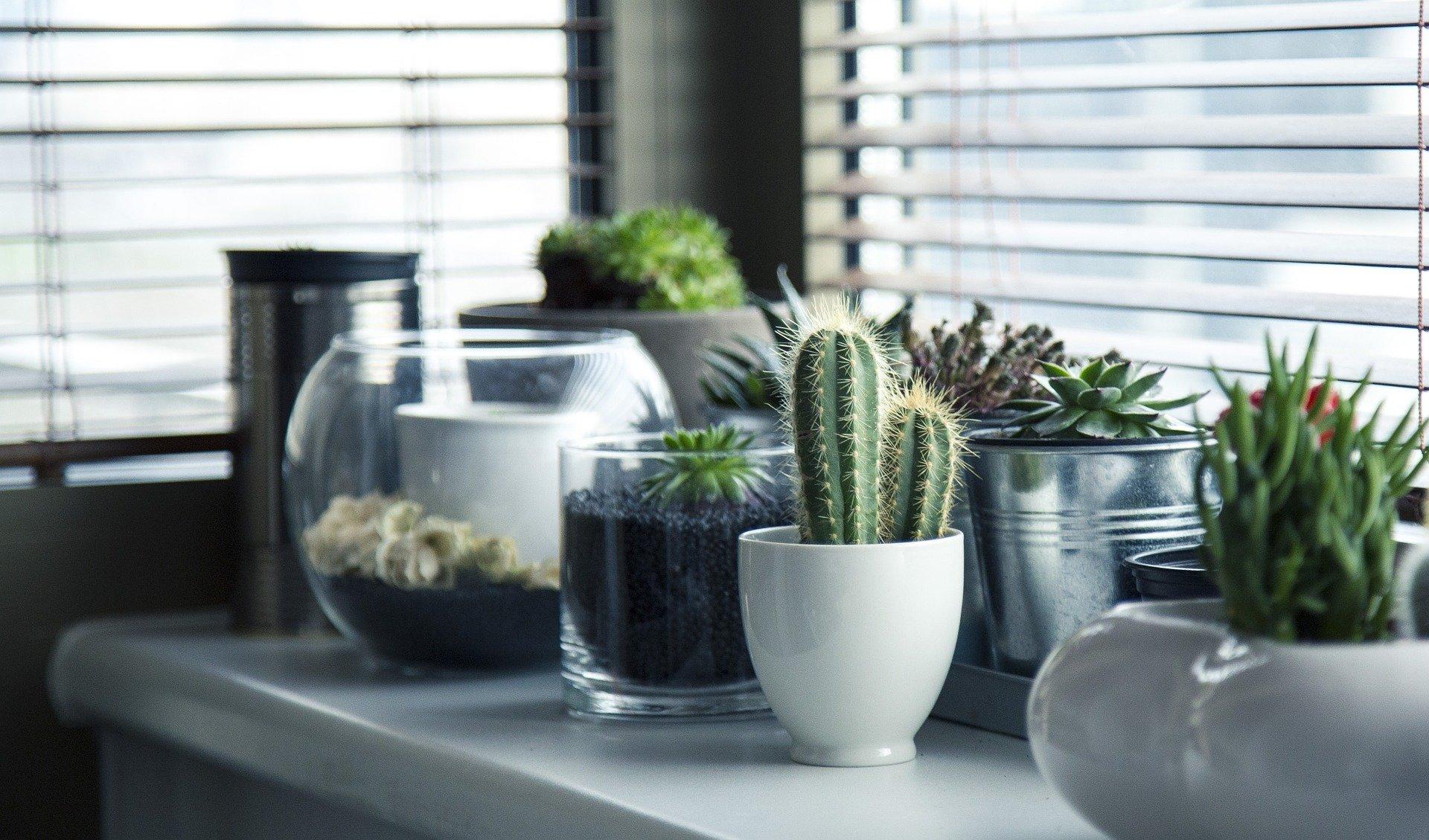 Nezahtevne sobne rastline: popolna izbira za vse, ki ste veliko zdoma
